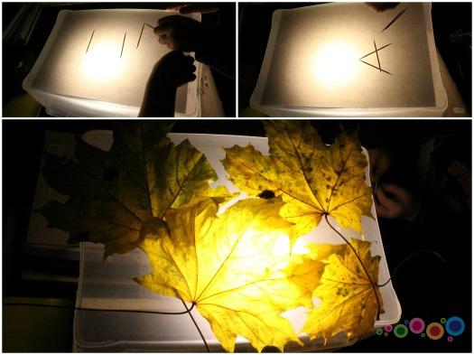 šviesos dėžė1